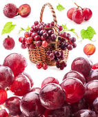 Collections of Grapes — Stock Photo
