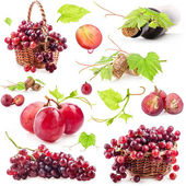 Collection of red grapes, bottle and cork — Stock Photo