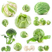 Collection of fresh cabbage — Stock Photo