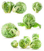 Fresh green Brussels sprouts — Stock Photo