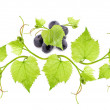 Blue wine grape and leaves isolated on white background — Stock Photo