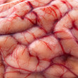 Stock Photo: Sheep's brain