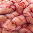 The sheep's brain - Stock Photo