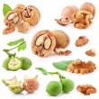 Collections of Walnuts — Stock Photo