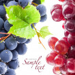 Stock Photo: Grapes with leaves
