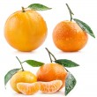 Collections of Tangerines — Stock Photo