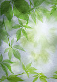 Green leaves on a vintage paper — Stock Photo