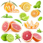 Collection of citrus — 图库照片