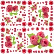 Collection of Raspberry — Stock Photo