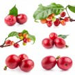 Collection of Red coffee beans — Stockfoto