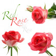 Red roses — Stock Photo #25677663
