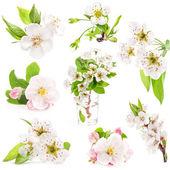 Kolekcja wiosna kwiatów drzew owocowych — Zdjęcie stockowe