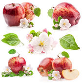 Collection of Red Apples — Stock Photo