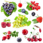 Collection of berry fruit — Stock Photo