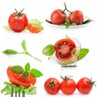 Collections of Tomatoes — Stock Photo