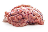 The sheep's brain — Stock Photo