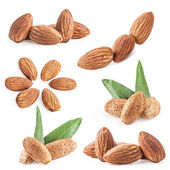 Collections of almond nuts with leaves — Foto Stock