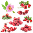 Rose hips (Rosa canina) flowers and fruits — Stock Photo #26132253