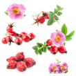 Rose hips (Rosa canina) flowers and fruits — Stock Photo