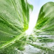 Green leaf with water drops — Stock Photo #37697647