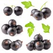 Stock Photo: Black currant