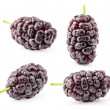 Collection of mulberry — Stock Photo #37697745