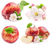 Collection of red apples with flowers — Stock Photo