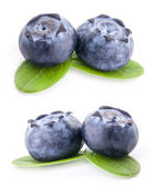 Blueberries and leaves — Stockfoto
