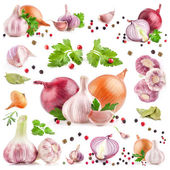 Collection of garlic and onion — Stock Photo