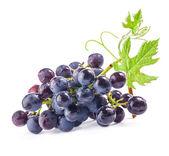 Olgun kara üzüm yaprakları ile — Stok fotoğraf