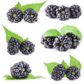Collections of Blackberry with leaves — Stock Photo