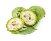 Green walnuts — Stock Photo