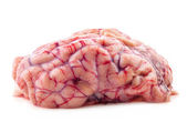 Brain — Stock Photo