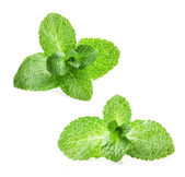 Fresh mint — Foto Stock