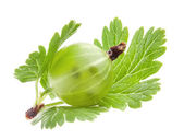 Green gooseberry with leaf — Stock Photo