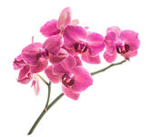 Orchid flowers — Foto de Stock