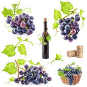 Collection of grapes, bottle and cork — Stock Photo