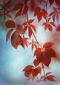 Autumn Red leaves on vintage paper — Stock Photo