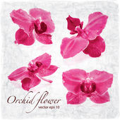 Orchid flowers background — Stock Vector