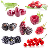 Collections of berry — Foto de Stock