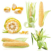 Collections of raw corn cobs — Stock Photo