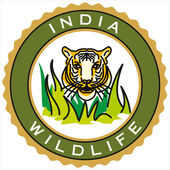 India wildlife — Stock Vector