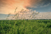 Sunset over agricultural field — Stock Photo