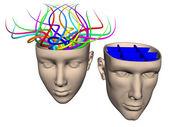 разница между мозгом женщина и мужчина — Стоковое фото