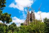 Sagrada trees crane — Stock Photo