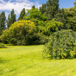 Tree in garden — Stockfoto #12519041
