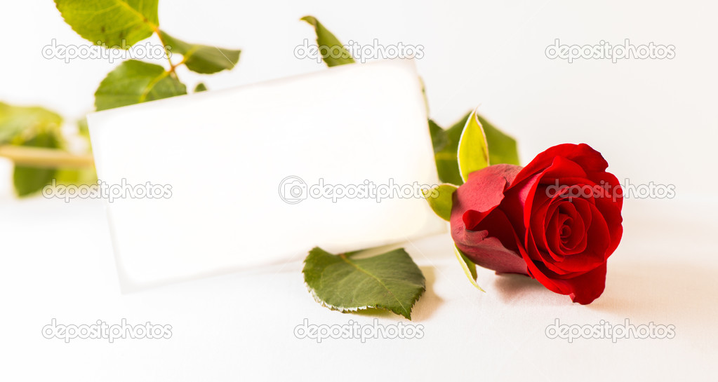 Rose and coupon on white background close up — Stock Photo #12685368