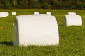 Yeşil bir ürün balya sarılmış plastik depolama — Stok fotoğraf