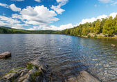 Wild forrest and lake — Stock Photo