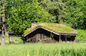 Old log house with grass growing on roof — Stok fotoğraf